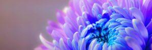 que significa el color violeta en el aura ¿qué significa el color violeta en el aura? ID204195 - hermandadblanca.org