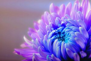 ¿Qué significa el Color Violeta en el Aura?