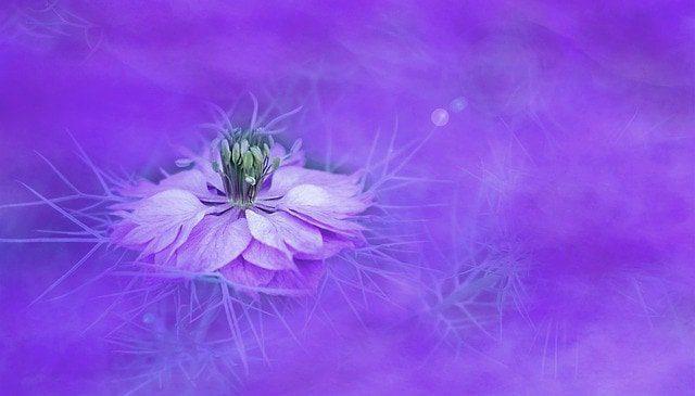 violeta ¿qué significa el color violeta en el aura? ID204195 - hermandadblanca.org