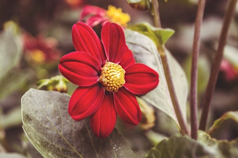 flor interior