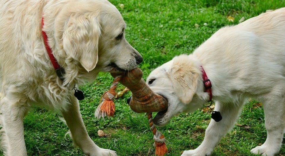perros conocer las almas grupales para sanar ID205877 - hermandadblanca.org