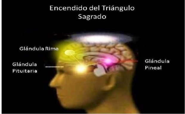 triangulo sagrado cómo relacionar el centro coronario con el primer rayo ID204431 - hermandadblanca.org