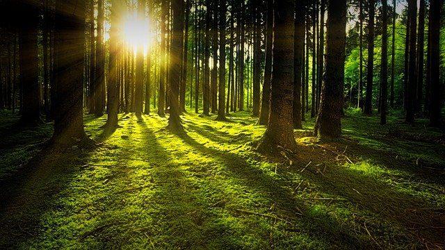 completo estampado de magnificencia ser completo estampado de magnificencia, por unicornios celestes y del ID209620 - hermandadblanca.org