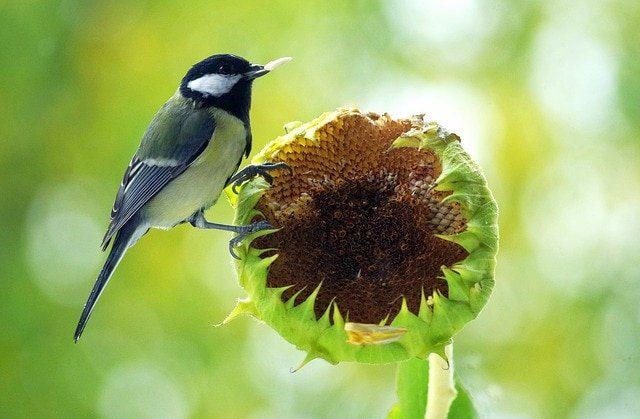 semillas de la creacion semillas de la creación por el arcángel miguel ID208443 - hermandadblanca.org