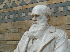 darwin natural history museum evolution natural reencarnacion en la historia europea 3 darwin i212391