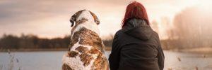 duea y mascota next day pets 8211 decirle adios a tu perro i212688