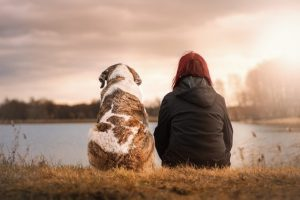 Next Day Pets – Decirle adiós a tu perro