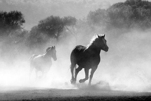horse 430441 340 rudolf steiner filosofia de la libertad 1 i212158