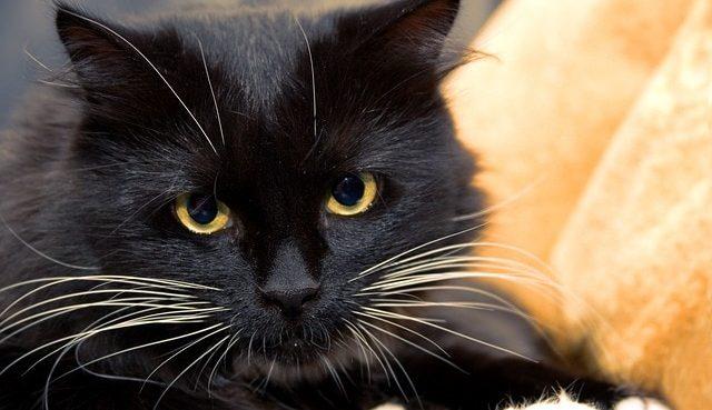 humanos soñar con gatos que significa soñar con gatos asombrosos seres de gran sabidur i212982