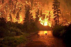 Mensaje para los Trabajadores de la Luz: Incendios en la Selva Amazónica