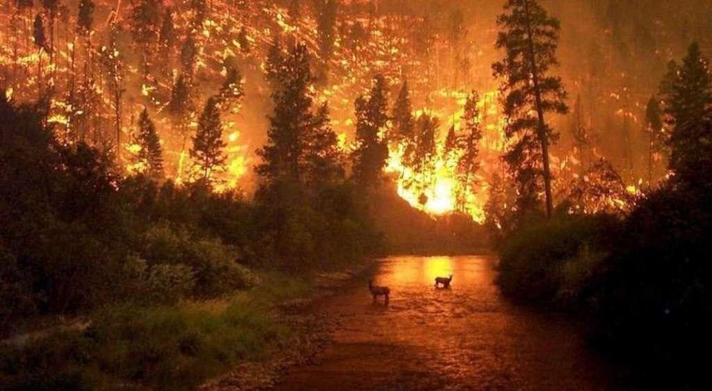 incendios en la selva amazonica muy fuerte mensaje para los trabajadores de la luz incendios en la selva amazon i212463