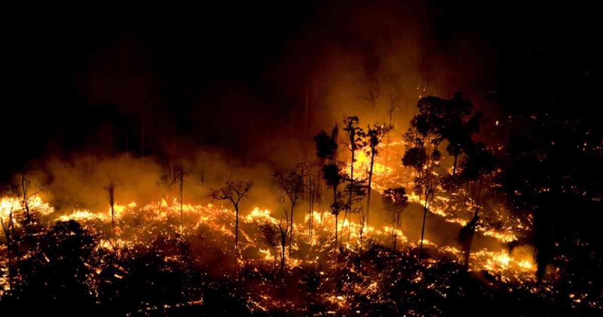 incendios en la selva amazonica ver mensaje para los trabajadores de la luz incendios en la selva amazon i212463