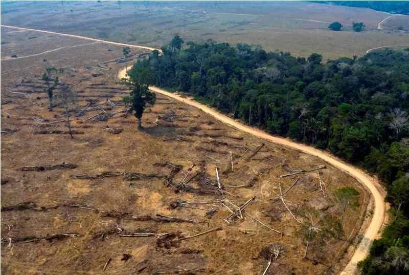 incendiosselva amazonica mensaje para los trabajadores de la luz incendios en la selva amazon i212463