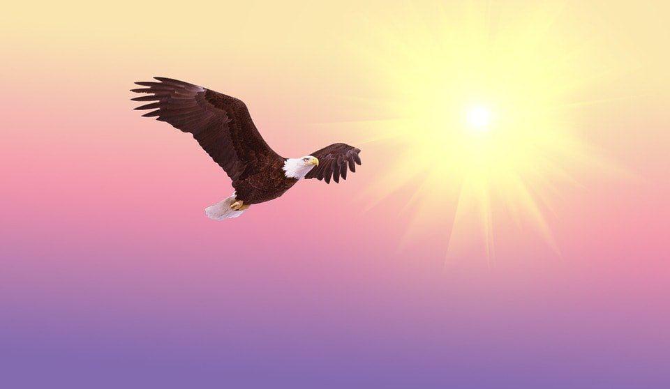 intuicionbald eagle 521492 960 720 anna kingsford el reino del alma i212683