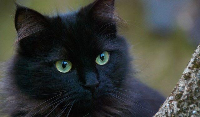 soñar con gatos asombrosos seres de gran sabidur i212982
