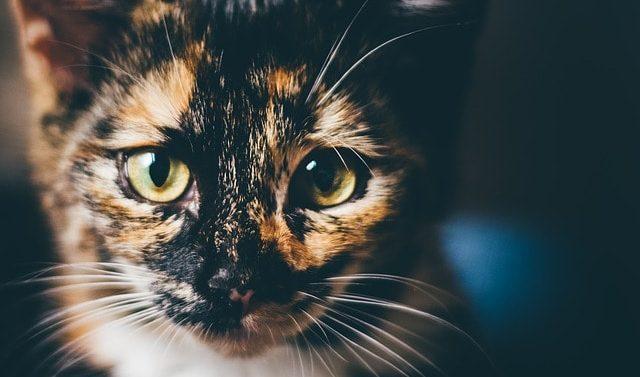 soñar con Gatos asombrosos seres de gran sabiduría