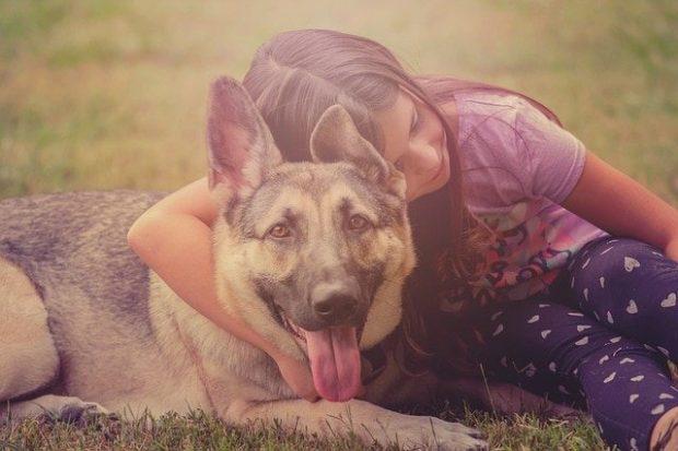pastor aleman y nia next day pets 8211 decirle adios a tu perro i212688