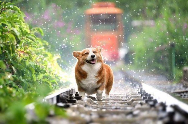perro feliz next day pets 8211 decirle adios a tu perro i212688