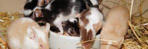 que significa para ti soar con ratones que significa soar con ratones i213382