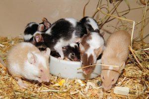 ¿Qué Significa soñar con ratones?