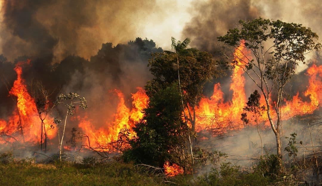 selva amazonica mensaje para los trabajadores de la luz incendios en la selva amazon i212463
