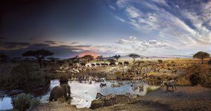 serengueti 28a0aa11 1200x630 bestiarios animales miticos 8230 otra vez 1a parte i211623