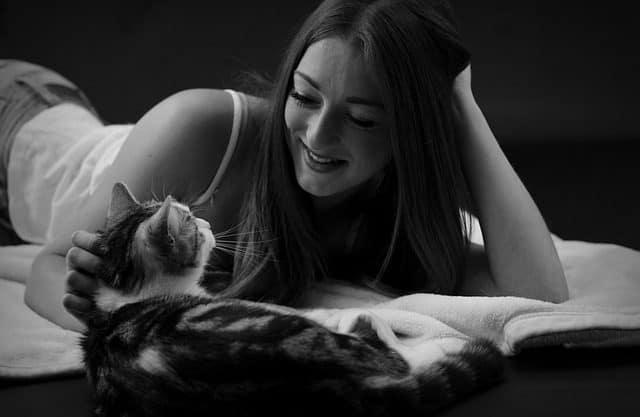 soñar con gatos en tu vida de mujer que significa soar con gatos asombrosos seres de gran sigilo i212982