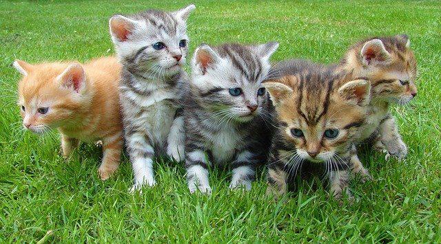 soar con gatos en tu vida dia y noche que significa soar con gatos asombrosos seres de gran sabidur i212982