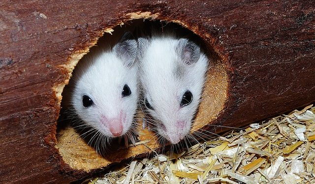 soñar con ratones en los sueños que significa soñar con ratones i213382
