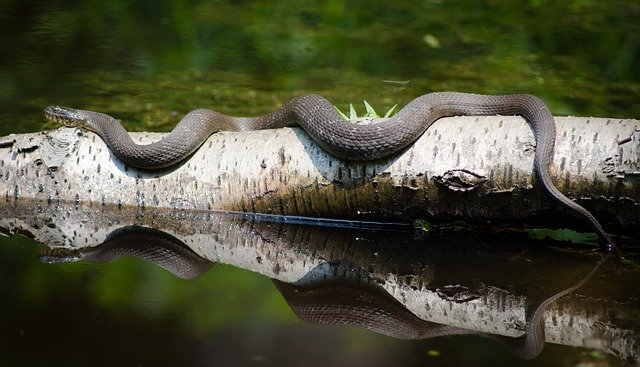 soar con serpientes cada dia soar con serpientes que significa es asombroso lo que sabra i212137