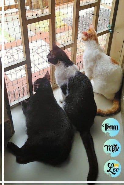 tom max y leo que significa soñar con gatos asombrosos seres de gran sabidur i212982