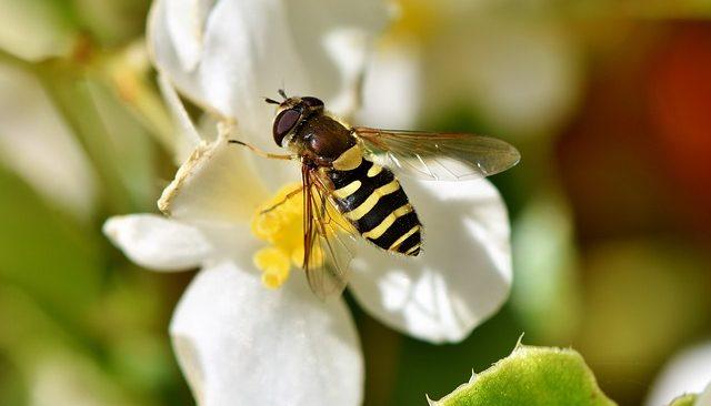 un mensaje para los trabajadores de la luz los insectos tambien son creados de luz un mensaje para los trabajadores de la luz los insectos tambien so i213362