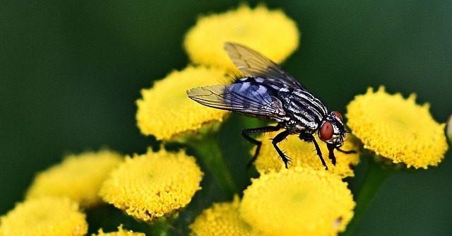 un mensaje para los trabajadores de la luz los insectos tambien son de luz un mensaje para los trabajadores de la luz los insectos tambien so i213362