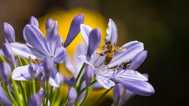 un mensaje para los trabajadores de la luz los insectos tambien vienen de luz un mensaje para los trabajadores de la luz los insectos tambien so i213362