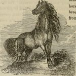 el caballo anna bonus kingsford 8 proteccion animal i214119