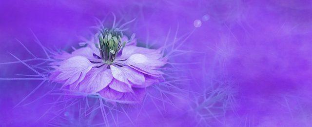 flor del signo virgo 21 razones que hacen que el signo virgo sea un ser excepcional i214295