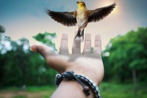 Filosofía de la libertad Rudolf Steiner (6) La imaginación moral