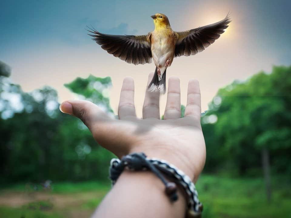 librecreative 2801970 960 720 filosofia de la libertad rudolf steiner 6 la imaginacion moral i213910