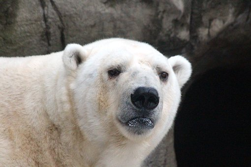 osowhite bear 3686186 340 filosofia de la libertad 7 individualidad y especie i214341