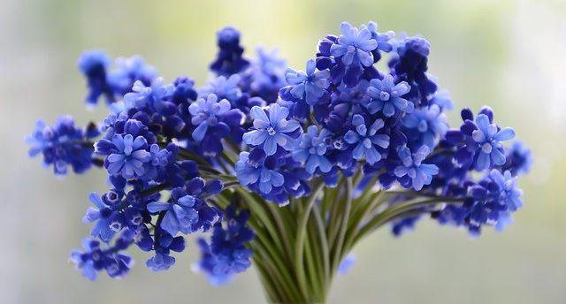 significado del color azul la historia y el significado del color azul i214134