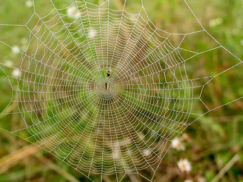como hacen las aranas su telarana soar con araas conoce lo que significa desde los distintos aspe i214961
