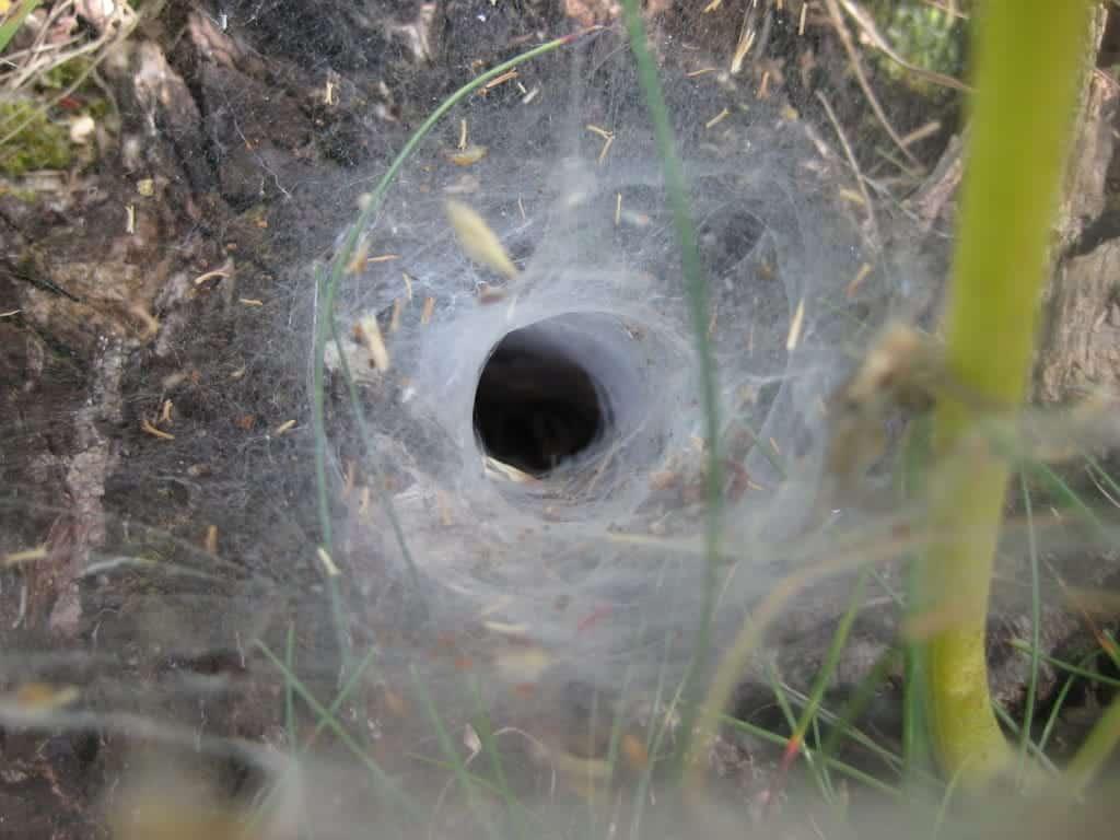 embudo soar con araas conoce lo que significa desde los distintos aspe i214961