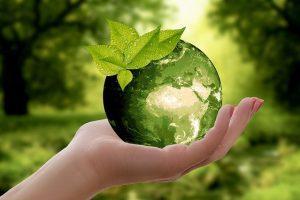 Co-creación de armonía y equilibrio: P'taah a través de Jani King