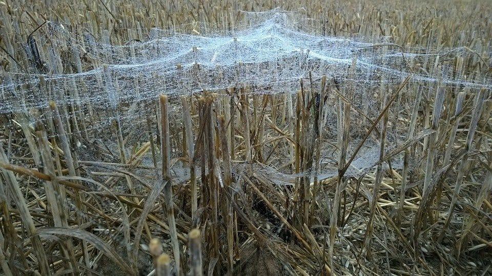 red horizontal soar con araas conoce lo que significa desde los distintos aspe i214961
