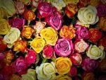 roses 1229148 640 conoces el lenguaje de las flores y su significado i215561