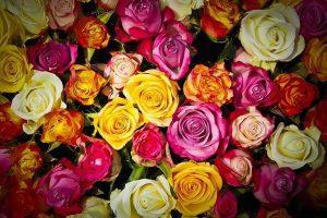 ¿Conoces el lenguaje de las flores y su significado?