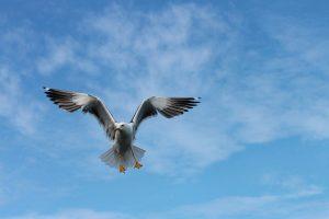seagull 4603954 640 quan yin dice la ascension del planeta es inminente i214906