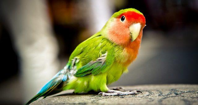 significado del color verde significado del color verde que sabes del color del chakra del cor i214831