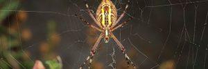 soar con araas constantemente soar con araas conoce lo que significa desde los distintos aspe i214961