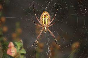 Soñar con Arañas, ¡conoce lo que significa desde los distintos aspectos de tu vida!